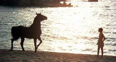 'The black stallion' is an amazing film, stunningly filmed and starring a world wise Mickey Rooney. Haunting soundtrack by Carmine Coppola. Beautiful Film, Most Beautiful Images, Beautiful Horses, Black Horses, Wild Horses, Black Stallion Movie, Horse Movies, Epic Film, Unlikely Friends