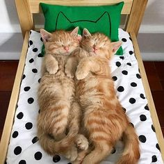 Unique Cat Lover Gifts, Gifts for Cat Owners, Unique Cat Lover Gifts - Shop for classy modern useful cat designs + products from Cat Pillow Cases to Cat Toys! Cute Kittens, Cats And Kittens, Kitty Cats, Ragdoll Kittens, Tabby Cats, Bengal Cats, I Love Cats, Crazy Cats, Cat Lover Gifts