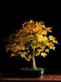 O Outono está a chegar de novo e, com ele, as fantásticas cores do costume… delicie-se nesta galeria.