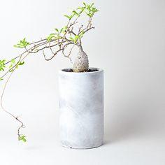 Snow Gray Cylinder Tall Pot S + Fockea edulis