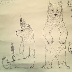 Coral and Tusk bears and everything