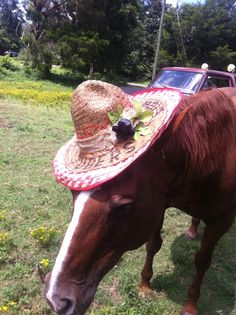 Crunch wearing my river tubing hat