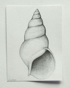 drawing pencil Buscar con Google PINTADO A LÁPIZ Pencil drawings Drawings Shell drawing