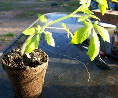 blog photos March 2012 301