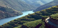Aquapura Douro Valley, Portugal. The oldest demarcated region for wine production in the world! 113 km of vineyards!