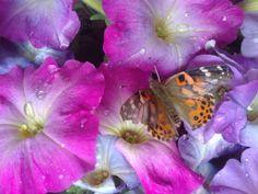 Butterfly just born-Elizabeth Van Allen