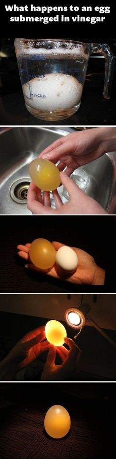 Very cool egg experiment!