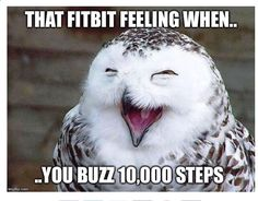Owl Fitbit                                                                                                                                                      More