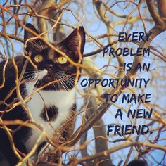 Every problem is an opportunity to make a friend.    [ Stay INSPIRED Teachers ] [ Get a bunch of FREE TEACHER TOOLS at http://imLhL.com ][ Get Laughspirations by email at http://www.Laughspiration.com ][ Teachers need to laugh and need to stay inspired. They need Laughspiration! ]
