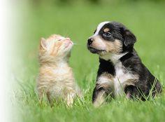 Allergies Allergies, Presentation, Animals, Animales, Animaux, Animal, Animais