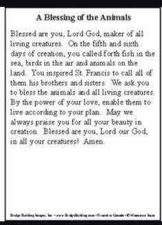 St Francis prayer for animals 🙏🦁🐶🦄🙏 St Francis Quotes, Saint Francis Prayer, Prayer Book, My Prayer, Animal Love Quotes, Mother Images, Angel Prayers, Special Prayers, Give Me Jesus