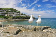 New Quay is a picturesque seaside town on the Cardigan Bay coast of West Wales. Its golden sandy beaches and sheltered harbour make New Quay a delight to visit at any time of year.