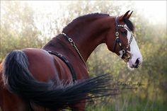 Most Beautiful Horses, All The Pretty Horses, Animals Beautiful, Cute Horses, Horse Love, Horse Photos, Horse Pictures, Arte Equina, Horse Portrait