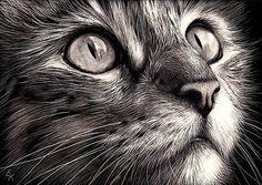 """Cat's face - scratchboard art"" by Elena Kolotusha   Redbubble"