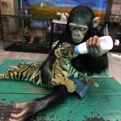 Baby feeding baby - Click image to find more Animals Pinterest pins