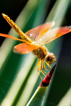 About Wild Animals: Picture of a colorful dragonfly insect Pictures Of Insects, Eye Pictures, Cool Pictures, Free Photos, Free Images, Free Image Sites, Dragonfly Insect, Unicorn Photos, Year Of The Dragon