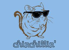 "Chinchillas as pets - not the first thing you tend to think of when you hear the word ""chinchilla"". Chinchillas, renowned for their fur, are usually associated with expensive coats and accessories. But did you know you can have them as pets? Chinchillas, Funny Hoodies, Funny Tshirts, Funny Kids, The Funny, Chinchilla Baby, Funny Animals, Cute Animals, Crazy Animals"