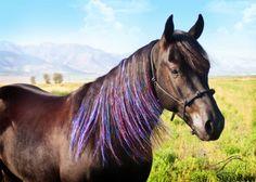 fun horse tack | Bling Horse Tack
