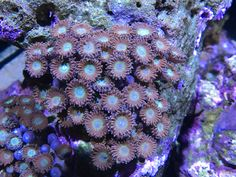 Mesmerising Timelapse Of A Coral Reef Saltwater Tank, Color Studies, Sea And Ocean, Teal, Flowers, Pictures, Study, Rings, Youtube
