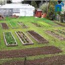 Video-curso gratuito: Iníciate en la huerta orgánica ecoagricultor.com