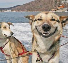 Los perros tienen cerca de 100 expresiones faciales, la mayor parte de ellas es hecha con las orejas.