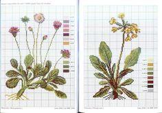 Gallery.ru/Photo # 10-Herbarium — Flax grass-Mosca