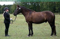 Estonian Native / Klepper - gelding Vahvel