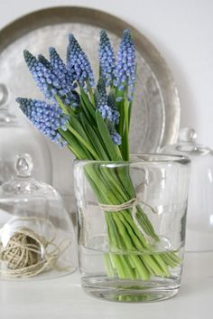 Grape Hyacinth, I love the smell of these almost as much as a Hyacinth!