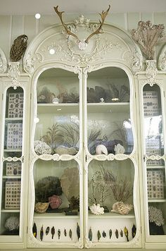 Cabinet of Curiosities of Bonnier de la Mosson, Museum of Natural History, Paris by astropop (Morbid Curiosity), via Flickr