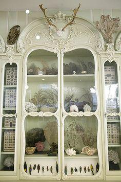 Cabinet of Curiosities of Bonnier de la Mosson, Museum of Natural History, Paris by astropop (Morbid Curiosity), via Flickr