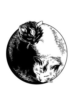 Inspired by my cats sleeping in a bucket in front of my house. Their position was so perfectly ying-yang shaped that I needed to capture it as soon as I. Ying Y Yang, Yin Yang Art, Yin And Yang, Yin Yang Tattoos, Ink Tattoo, Body Art Tattoos, Tattoo Cat, Cat Drawing, Future Tattoos