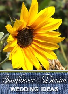 Sunflower and Denim Wedding Ideas