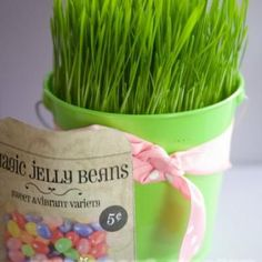 """Magic Lolly seeds  fill the seed bag with jelly beans. have the kids """"Plant"""" them in a pot. the next morning they will have magically grown into Suckers!! * ;) *"""
