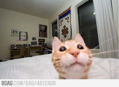 Who doesn't like to take selfies? This time not celebrities, sports personalities and human but funniest pics of cats taking selfies will shock you. Enjoy the awesome and funny cat selfies. - Page 2 of 3 Selfies, Funny Cat Pictures, Animal Pictures, Funny Photos, Funniest Pictures, Baby Cats, Cats And Kittens, I Love Cats, Cute Cats