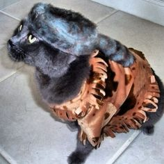 lol ~ I'm impressed that they got this on the cat! #DavyCrocKat