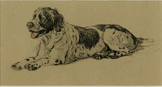 """Spaniel by Cecil Aldin C.1934 Vintage Dog Print Matted - 8x10"""" by AntiquePrintBoutique on Etsy https://www.etsy.com/listing/207523996/spaniel-by-cecil-aldin-c1934-vintage-dog"""