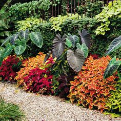 The great thing about foliage is that besides offering dynamic color, most choices are low-maintenance. Only twice during the summer did the coleus have to be cut.