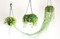 Beautiful DIY indoor hanging plants for your home. Over twenty five DIY indoor hanging plants decor ideas. Feed your design ideas now. Hanging Plants Outdoor, Indoor Plant Wall, Hanging Planters, Indoor Plants, Indoor Garden, Hang Plants From Ceiling, Ceiling Hanging, Plant Hooks, Plant Shelves