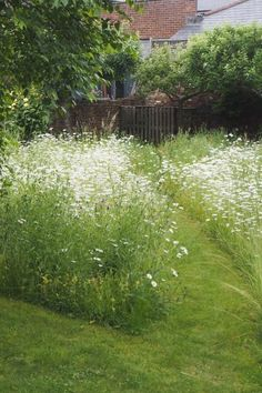to create a beautiful mini meadow garden How to create a wildflower meadow in a small garden or backyardHow to create a wildflower meadow in a small garden or backyard