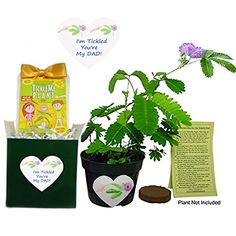 Father's Day / Birthday Gift -TickleMe Plant Box Set -To ... http://www.amazon.com/dp/B01F2T93TC/ref=cm_sw_r_pi_dp_ldpmxb165C89R