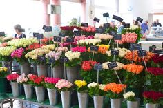 European Flower Markets | Tulipina