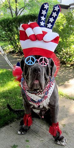Life, Liberty & the Pursuit of Hot Dogs: What Happens When Pets Celebrate July Fourth