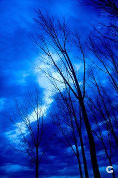 Winter, Baum, Jahreszeit, winter, tree, season
