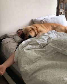 Snuggles with bae 😍❤️ - animals - Perros Graciosos Cute Funny Animals, Cute Baby Animals, Funny Dogs, Funny Memes, Cute Puppies, Cute Dogs, Cute Babies, Snuggles, Cute Animal Videos