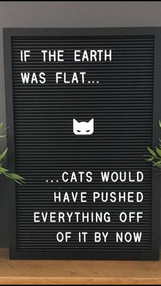 Ideas For Funny Mom Humor Truths Awesome Crazy Cat Lady, Crazy Cats, Funny Cats, Funny Animals, Cats Humor, Funny Horses, Image Citation, Doja Cat, Mom Humor