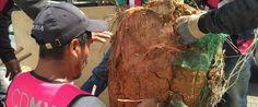 Beneficios ambientales en Mixcoac-Insurgentes con reforestación