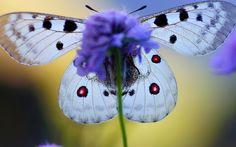макросъемка бабочек: 16 тыс изображений найдено в Яндекс.Картинках