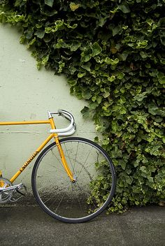 Love how the greenery frames the bike. Solid composition