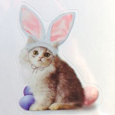 EASTER CAT-BUNNY