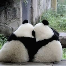 139 thousand likes 412 feedback Panda Vibes pandavibes on Instagr Baby Animals Super Cute, Cute Little Animals, Cute Funny Animals, Cute Dogs, Cute Babies, Niedlicher Panda, Panda Art, Cute Panda, Cute Animal Photos